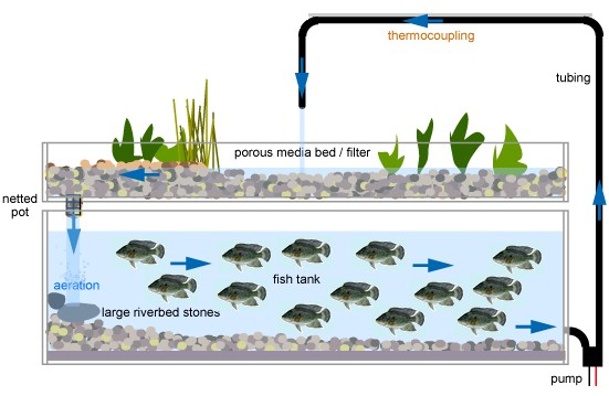 Cr images : www.aquaponicssystems.net
